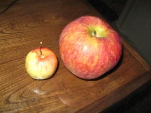 دو سیب(1)