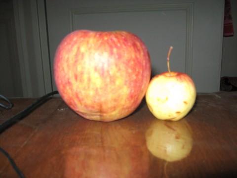 دو سیب(2)